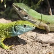 0010_Macin_Broasca Testoasa si reptile_2011_01_010