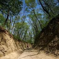 Drumuri prin pădure, adevărate tuneluri_Muntii Macin 1 Mai 2011 Culmea Pricopanului_Cozluk_Fundu_Plopilor
