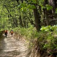 Drumuri prin pădure_Muntii Macin 1 Mai 2011 Culmea Pricopanului_Cozluk_Fundu_Plopilor