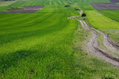 Terenuri_cultivate_Muntii Macin 1 Mai 2011 Culmea Pricopanului_Cozluk_Fundu_Plopilor