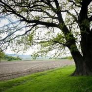 Stejarul de la Cozluk_Muntii Macin 1 Mai 2011 Culmea Pricopanului_Cozluk_Fundu_Plopilor