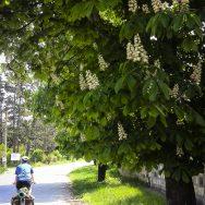 bicicleta-bulgaria-orlova-chuka-katselovo-sadina-cherven_32