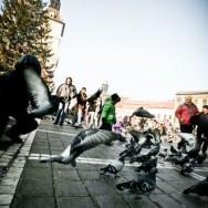 Porumbeii, singurii care nu sufera de frig - Brasov, Oras de poveste