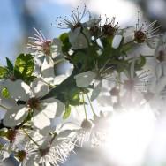 Flori primavara excursie cartier - cartitaplimbareata