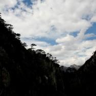 Pinul negru de Banat (pinus nigra banatica)