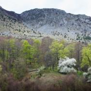 Primavara (Cheile Tasnei-Valea Cernei, Muntii Mehedinti)