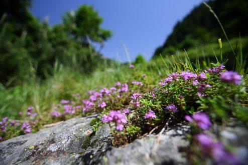 Fagaras traseu Piscul Negru - Lacul Caltun_05