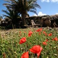 Neste maci si palmieri in zona Casa do Sardinha