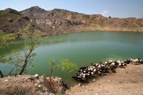 Localnicii folosesc lacul pentru adapat vitele - Lacul Iacobdeal - Turcoaia - Muntii Macin