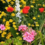 Flori, flori si iar flori - Madeira e cu adevarat o gradina plutitoare