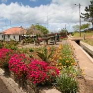 Flori, flori si iar flori peste tot in Madeira + o prima levada