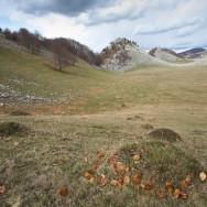 Musuroaie de Cartita in Poiana Porcului -  Poienile de Sus ale Cernei