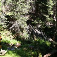 Padina si Valea Horoabei - Bucegi - iulie 2016_03