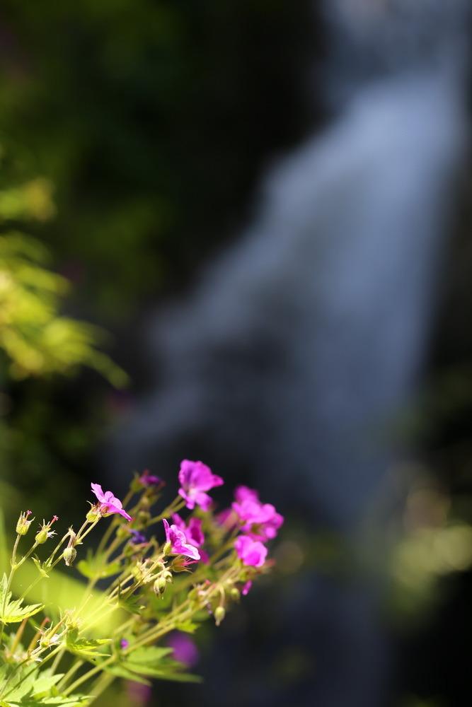 Padina si Valea Horoabei - Bucegi - iulie 2016_05