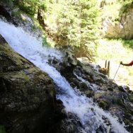 Padina si Valea Horoabei - Bucegi - iulie 2016_08