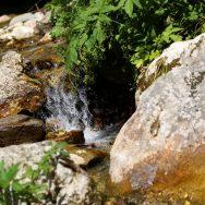 Padina si Valea Horoabei - Bucegi - iulie 2016_43