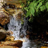 Padina si Valea Horoabei - Bucegi - iulie 2016_44