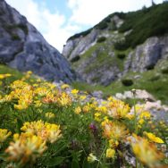 Padina si Valea Horoabei - Bucegi - iulie 2016_54