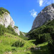 Padina si Valea Horoabei - Bucegi - iulie 2016_60