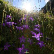 Padina si Valea Horoabei - Bucegi - iulie 2016_61