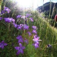 Padina si Valea Horoabei - Bucegi - iulie 2016_62