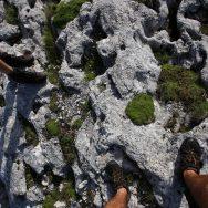 Padina si Valea Horoabei - Bucegi - iulie 2016_65