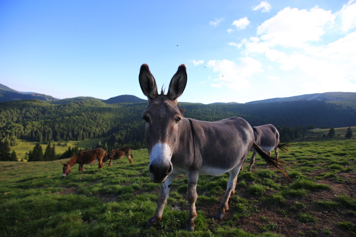 Padina si Valea Horoabei - Bucegi - iulie 2016_68