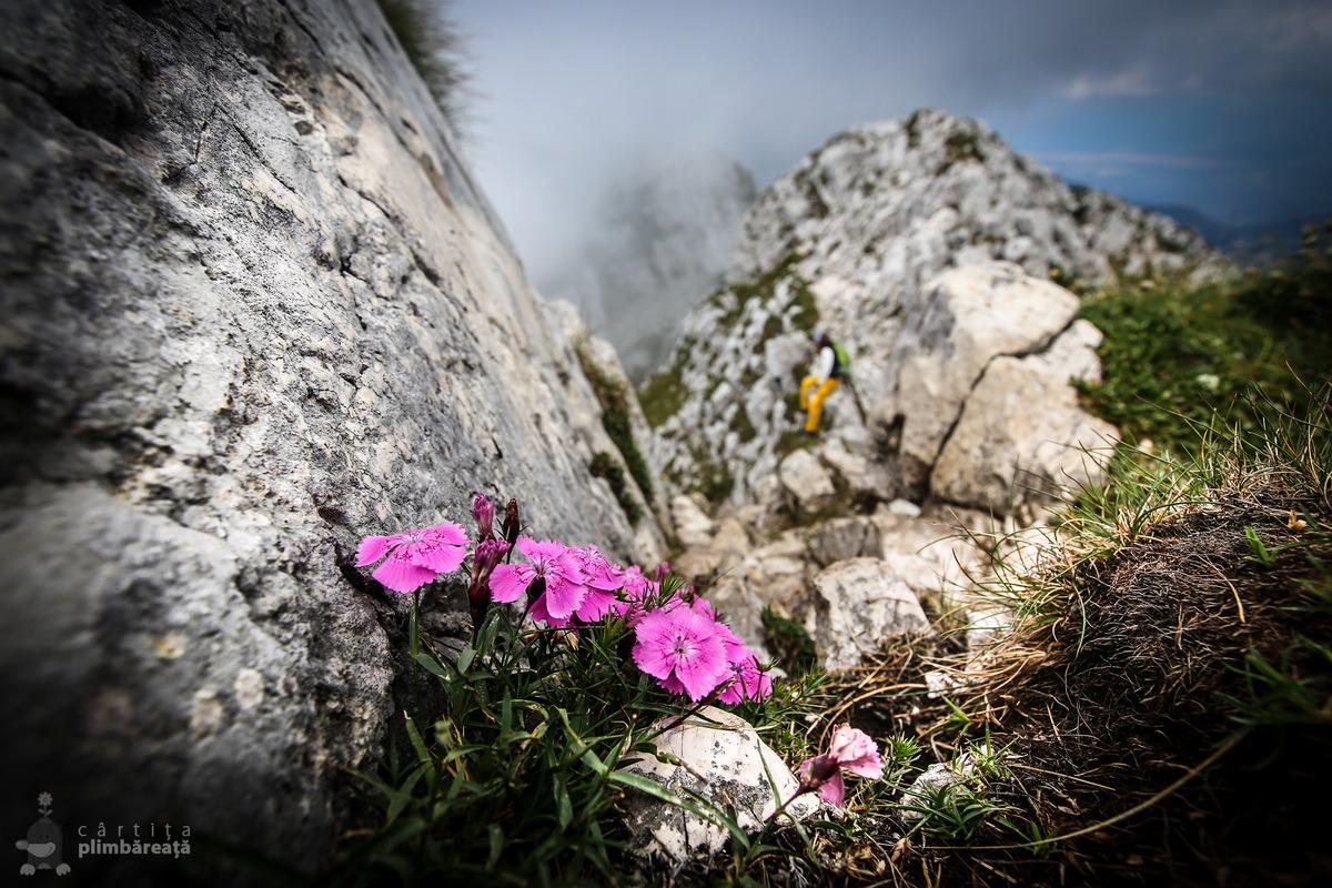 Piatra Craiului- Plaiul Foii - Zaplaz - La Lanturi - Creasta Nordica - Curmatura - Fantana lui Botorog_12