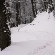 Plimbare pe schiuri Gura Diham Poiana Izvoarelor_07