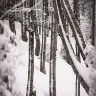 Plimbare pe schiuri Gura Diham Poiana Izvoarelor_08