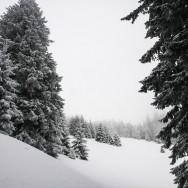 Plimbare pe schiuri Gura Diham Poiana Izvoarelor_13