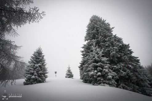 Plimbare pe schiuri Gura Diham Poiana Izvoarelor_14
