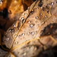 Plimbare si fotografii prin Pestera - Rucar - Bran_03