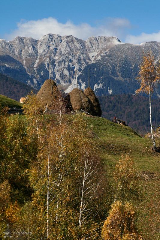 O tura de toamna in Culoarul Rucar-Bran. Bucegii si Piatra Craiului se dau in spectacol in satul Pestera