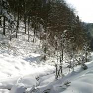 Valea Grecului - din Azuga la Cabana Diham